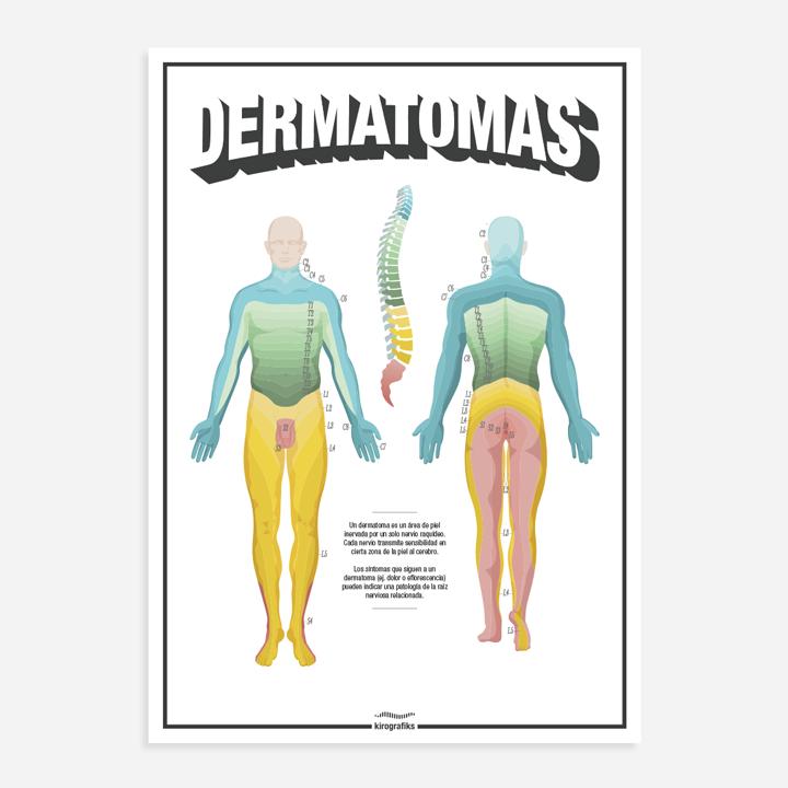 Asombroso Dermatomas Cabeza Elaboración - Anatomía de Las ...